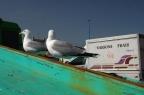 EssaouiraR17
